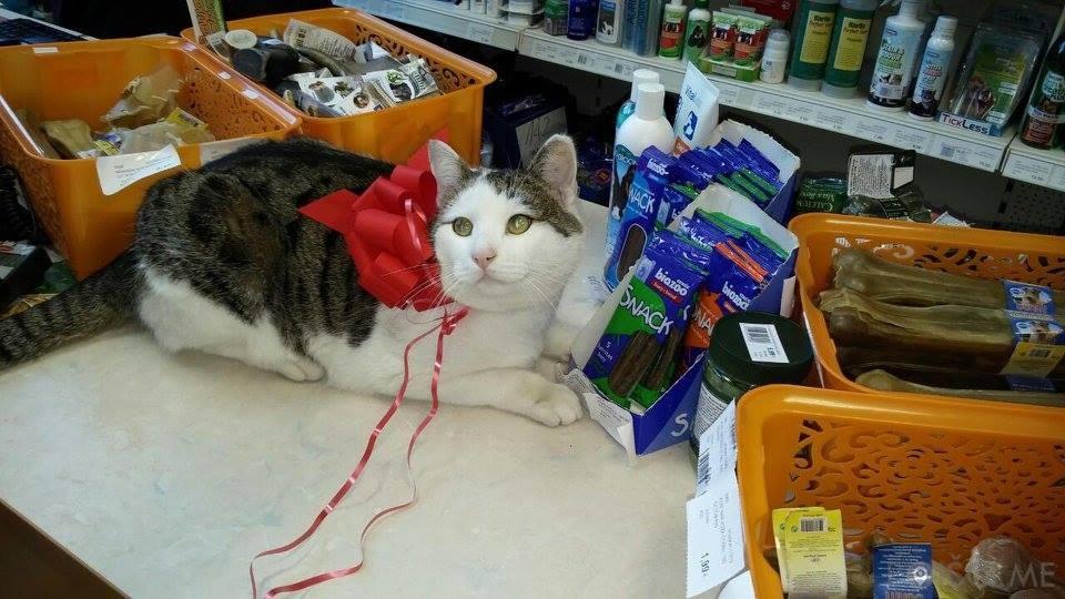 Trgovina za male živali, Imperial Pet, Trend marketing